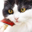 Как ухаживать за шерстью кошки