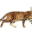 Тойгер кошка