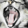 Почему у кота пахнет изо рта