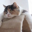 Дектомакс для котов