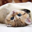 Эвинтон для кошек