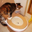 Как приучить котенка к унитазу