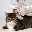 Веракол для кошек