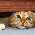 Как успокоить котенка