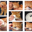 Как ухаживать за британским котенком