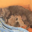 Как кошки рожают